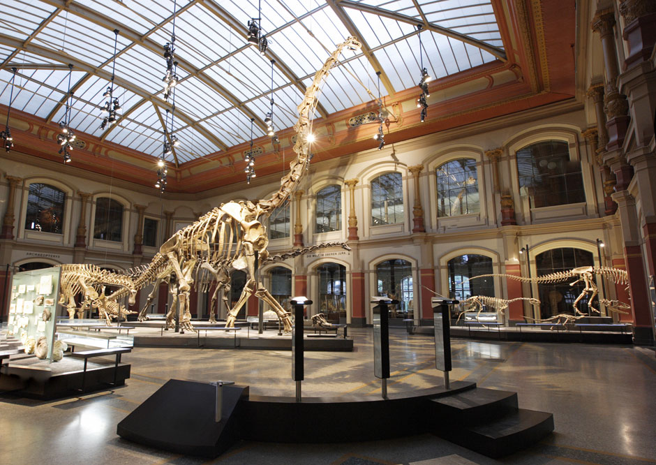 What Are Natural History Museum Displays Called